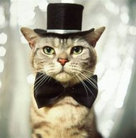 Sir CatSnap